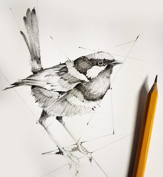 Pencil Shading, Birds, Dessin Academy
